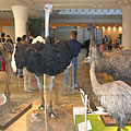 Feathered dinosaurs exhibition, flightless birds - Budapest, Hungría