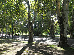 The typical atmosphere in the City Park - Budapest, Unkari
