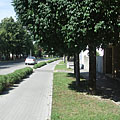 Bike path and trees on the main street - Paks, Węgry