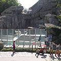 The so-called Polar Panorama landscape with two polar bears on the northern side of the Little Rock - Budapest, Ungarn