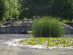 Small artificial pond in the middle of the park - Eger (Erlau), Ungarn