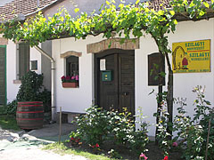 Fresh green grapevines and rose bushes in front of a wine cellar - Mogyoród, Ungarn