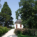 The pavilion on the King's Hill (the King's Pavilion or Royal Pavilion), beside it on the left a giant sequoia or giant redwood tree (Sequoiadendron giganteum) can be seen - Gödöllő, Ungarn