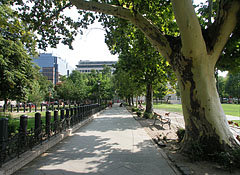 Walkway and plane trees in the park - Budapest, Ungern