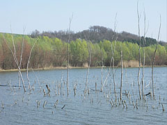 Sinkár Lake, dried out trees in the greater lake - Csővár, هنغاريا