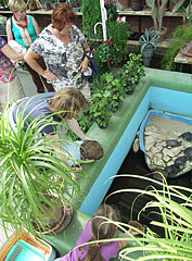 The red-eared slider turtles are the favorites of the children - Gödöllő, هنغاريا