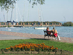 Colors of late September by the lake shore, in the St. Elizabeth grove - Balatonalmádi, Hungary