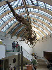A whale skeleton is hanging on the ceiling in the lobby - Budapest, Hungary
