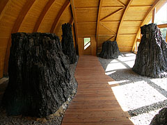 The covered shelter of the Bükkábrány mummified trees - Ipolytarnóc, Hungary