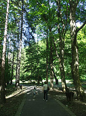 Footpath in the trees - Lillafüred, Hungary