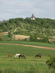 In springtime there is a lot of green grass for the horses - Mogyoród, Hungary