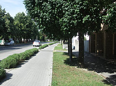 Bike path and trees on the main street - Paks, Hungary