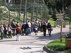 Visitors gathering at the enclosure of the brown bears - Veszprém, Hungary