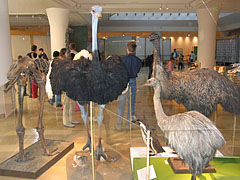 Feathered dinosaurs exhibition, flightless birds - ブダペスト, ハンガリー