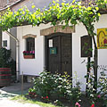 Fresh green grapevines and rose bushes in front of a wine cellar - Mogyoród, Мађарска